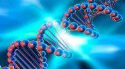 Компьютер на основе ДНК — фантастика, ставшая реальностью